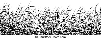 Detailed editable vector silhouette of a reed-bed