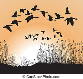 Reeds and Geese on white Background, Isolated vector