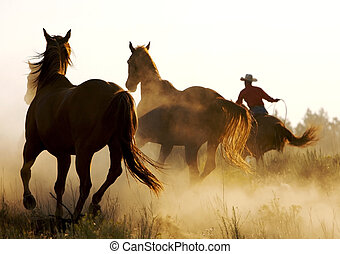 horse running in the desert with cowboy roping them