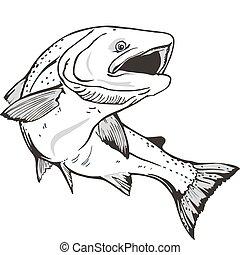 King salmon fish. Hand drawn