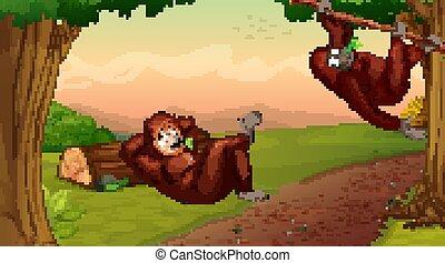 Scene with two chimpanzees climbing tree