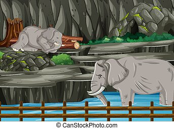 Scene with two elephants in the