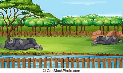 Scene with two gorillas in the