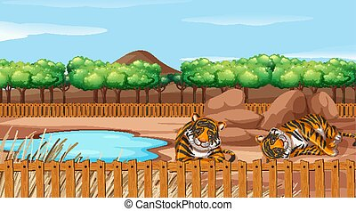 Scene with two tigers at the