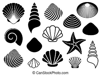 Set of different black sea shells and starfish