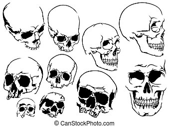 Set of 10 Black and White Human Skulls