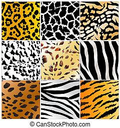 wild animals skin patterns