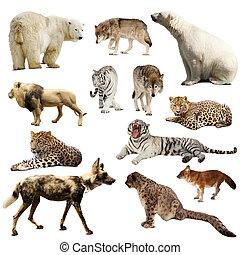 Set of predatory mammals. Isolated over white