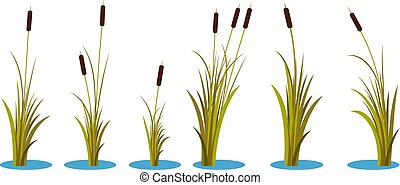 Set of variety autumn reeds with leaves on stem. Reed plant. Flat vector illustration isolated on white background. Clip art for decorate cartoon