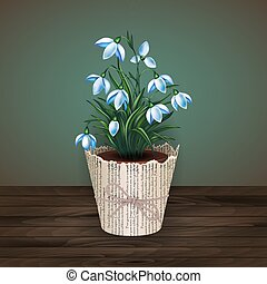 Snowdrop flowers in flowerpot