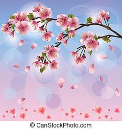 Spring background with sakura blossom - Japanese cherry tree