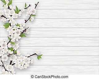 spring cherry branch on white old wood background