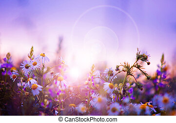 Spring flowers field at sunrise