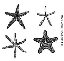 Set of 4 hand - drawn starfishes