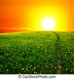 sunrise yellow colorful clouds and dandelion field