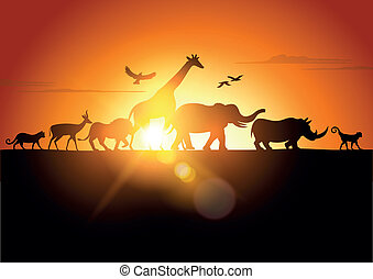 Sunset Safari