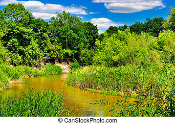 The river in the woods on a sunny day