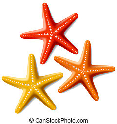 Vector illustration of starfishes on white bacjground