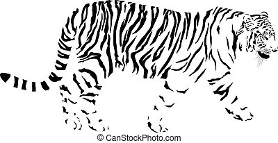 Tiger, black and white vector