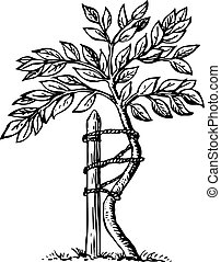 Bent tree roped to a stake on white background