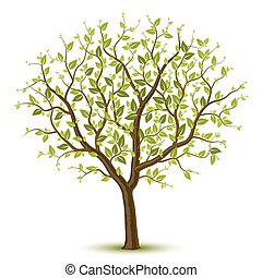 Vector illustration of a tree with green leafage