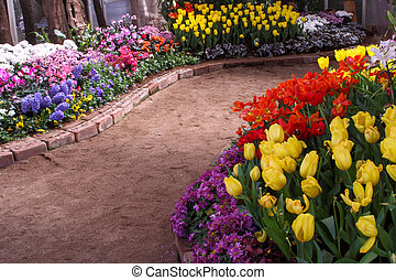 Tulips are grown up and exquisite. Parks