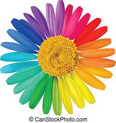 Vector colorful daisy. Vector beautiful art illustration.