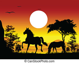 beauty horse silhouette