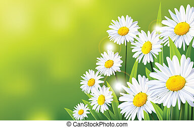 vector illustration of daisy flowers background for you design