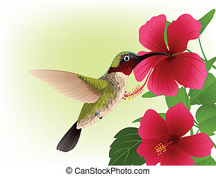 Vector Illustration Of Hummingbird with red flower
