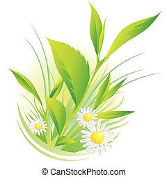Vector illustration of natural plants and chamomile