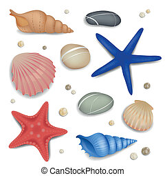 Vector Set of Seashells, Starfishes and Pebbles