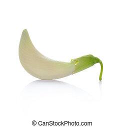 Vegetable Humming Bird Sesban Agasta on white background
