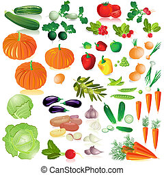 vegetables isolated collection