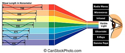 Visible Light with wave length diagram Vector Visible Light with wave length difference between spectra colors which give different properties human eye can see white color spectrum which composed of all colors of rainbow for physics science education