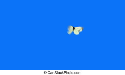 White Butterfly Flying on a Blue Background