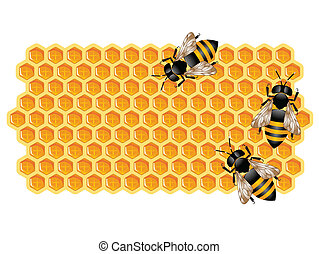 Vector illustration representing three cute bees working on a honeycomb isolated on white.