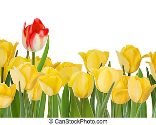 Yellow tulips and one red. And also includes EPS 8 vector