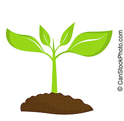 Plant seedling growing in soil. Vector illustration