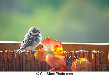 young titmouse is preparing for the first flight
