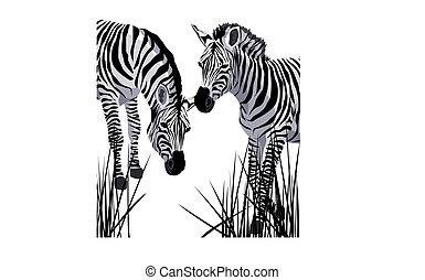 Illustration of two zebras