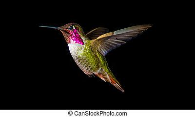 Zoom bird